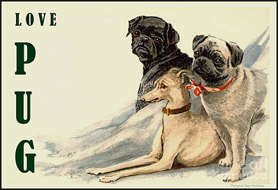 Whippet Digital Art - Love Pug by Pierpont Bay Archives