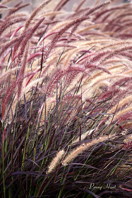 Photograph - Love Purple Fountain Grass by Penny Hunt