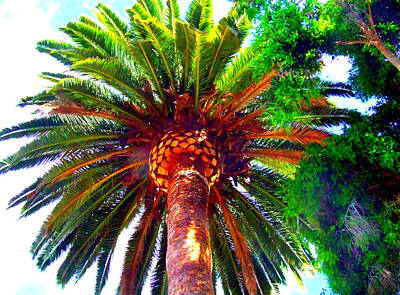 Photograph - Love Under The Palm In San Diego by Angela Annas