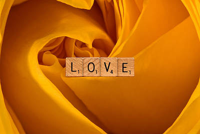 Photograph - Love-yellow Rose by  Onyonet  Photo Studios