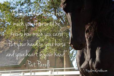 Photograph - Love Your Horse by Carol Whitaker