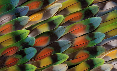 Lovebirds Photograph - Lovebird Tail Feather Pattern And Design by Darrell Gulin