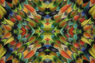 Lovebird Wall Art - Photograph - Lovebird Tail Feather Pattern by Darrell Gulin