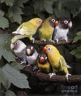 Photograph - Lovebirds by Hans Reinhard