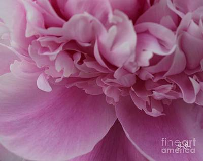 Photograph - Loveliness by Geri Glavis