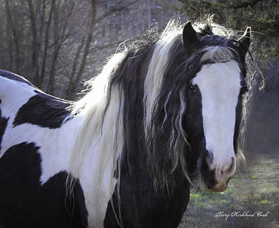 Gypsy Vanner Horse Photograph - Lovely Boy by Terry Kirkland Cook