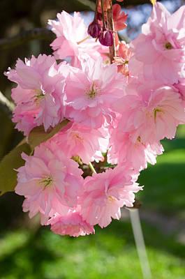 Lovely Cherry Blossom Art Print by Iryna Soltyska
