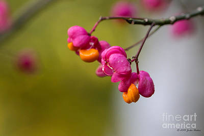 Lovely Colors - European Spindle Flower Seeds Art Print