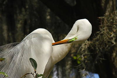 Photograph - Lovely Egret by Denise Mazzocco