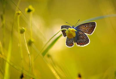 Fluttering Photograph - Lovely Evening by Grigoriy Pil