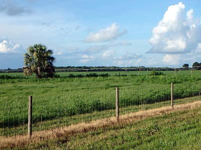 Photograph - Lovely Field 1 by Sheri McLeroy