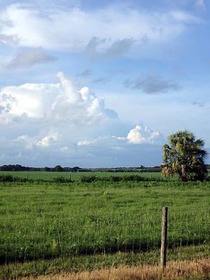 Photograph - Lovely Field 2 by Sheri McLeroy