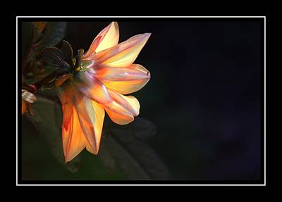 Photograph - Lovely Flower by Alice Gipson