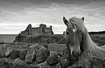 Photograph - Lovely Horse And Tantallon Castle by RicardMN Photography
