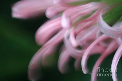 Photograph - Lovely In Pink by Mary Lou Chmura