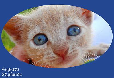 Photograph - Lovely Kitten by Augusta Stylianou