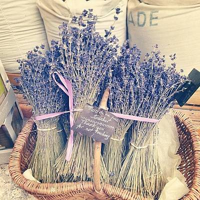 Lavender Photograph - Lovely #lavender by Kate Thomas