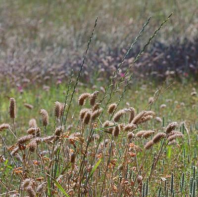 Medium Format Film Digital Art - Lovely Layers Of Grass by Linda Unger