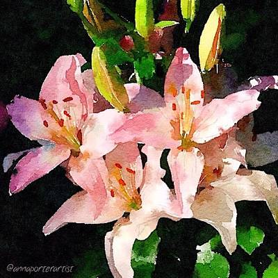 Lilies Photograph - Lovely Lilies Digital Painting by Anna Porter