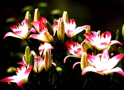 Photograph - Lovely Lilly Cluster by Robert  Rodvik