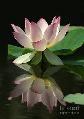 Photograph - Lovely Lotus Reflection by Sabrina L Ryan