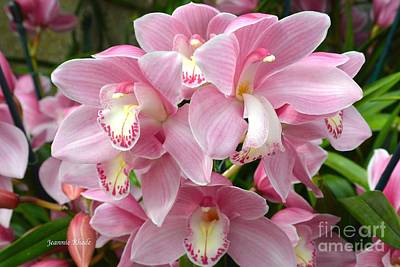 Art Print featuring the photograph Cymbidium Pink Orchids by Jeannie Rhode