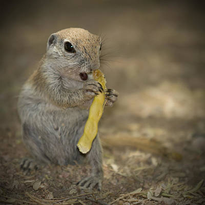 Scottsdale Photograph - Lovely Prairie Dog by Melanie Viola