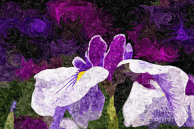 Blooming Digital Art - Lovely Purple And White Iris Flower In Early Summer by Beverly Claire Kaiya