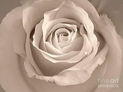 Photograph - Lovely Rose by Lutz Baar