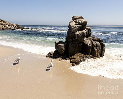 Lovers Point Seagulls Art Print by Juan Romagosa