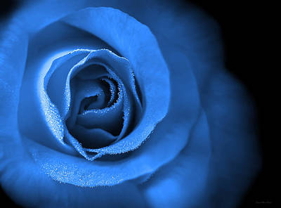 Photograph - Love's Eternal Blue Rose by Jennie Marie Schell