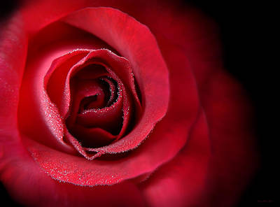 Love's Eternal Red Rose  Print by Jennie Marie Schell