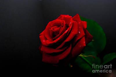 Loves Rose Art Print