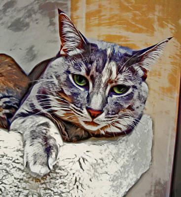 Kitten Digital Art - Loving Eyes by David G Paul