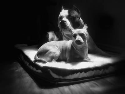 Pitbull Wall Art - Photograph - Loving Friends 1 by Larry Marshall