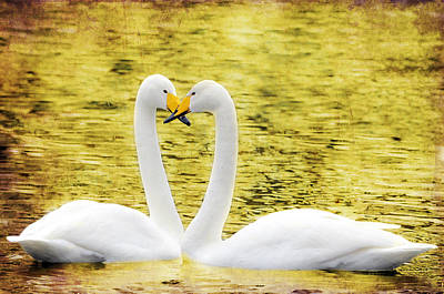 Loving Swans Original by Toppart Sweden