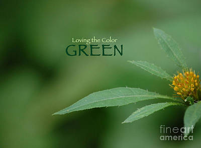 Photograph - Loving The Color Green Group Avatar by First Star Art
