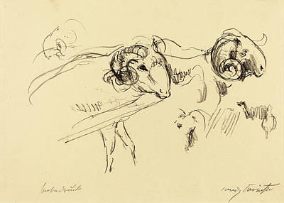 Ram Drawing - Lovis Corinth, Rams Schafböcke, German by Quint Lox