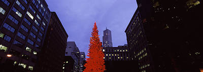 Festival Photograph - Low Angle View Of A Christmas Tree, San by Panoramic Images