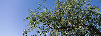San Rafael Photograph - Low Angle View Of A Tree Branch by Panoramic Images