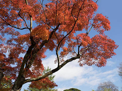 Katsura Wall Art - Photograph - Low Angle View Of Autumnal Trees by Panoramic Images