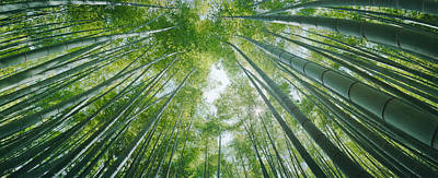 Low Angle View Of Bamboo Trees Art Print