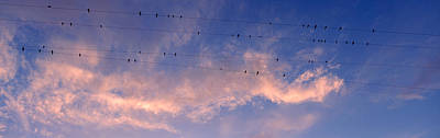 Flock Of Bird Photograph - Low Angle View Of Birds Perching by Panoramic Images
