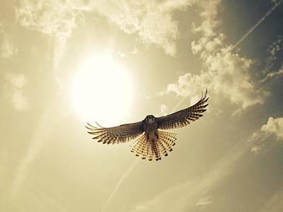 Low Angle View Of Eagle Flying Art Print by David Hernandez / Eyeem