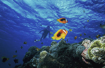 Undersea Photograph - Low Angle View Of Fish Undersea by Panoramic Images