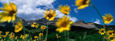 Focus On Background Photograph - Low Angle View Of Mountains, Montana by Panoramic Images
