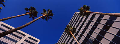 Low Angle View Of Palm Trees In Front Art Print by Panoramic Images