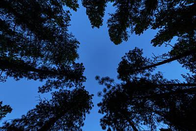 Ponderosa Pine Photograph - Low Angle View Of Ponderosa Pine by Panoramic Images