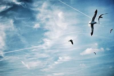 Low Angle View Of Seagulls Flying Art Print by Mark Mwamba / Eyeem