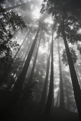 Photograph - Low Angle View Of Tree Tops In The Fog by Paul Quayle